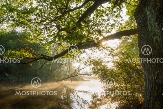 Sunlight peeking through the trees lining a tranquil river