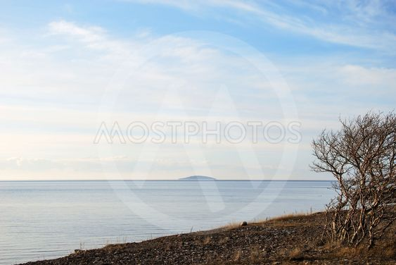 Tree at peaceful coastline