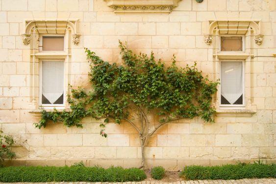 Tree between windows