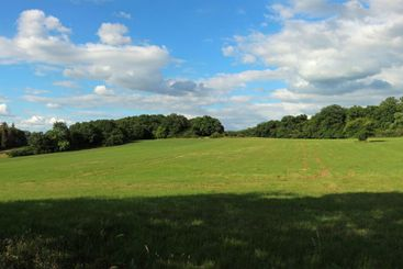 Panorama of a mown meadow with trees and forest