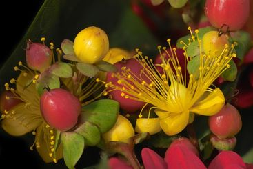 flowers and berries