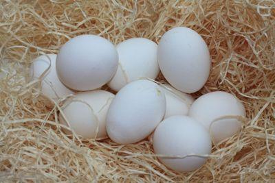 group of white eggs