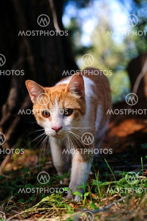 taajuusalueella ja valkoinen Cat