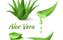 Set of Aloe Vera, realistic green plant, leaves and cut...