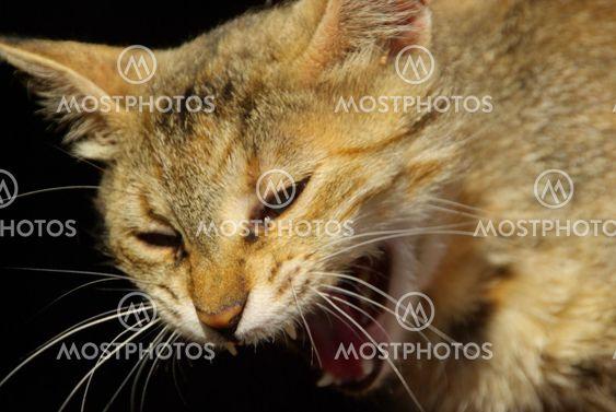 Katze - cat 22