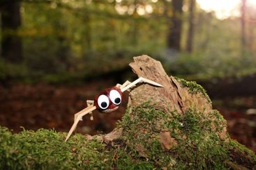 Crafted chestnut spider in the woods
