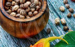 Seeds, and flowers of nasturtium
