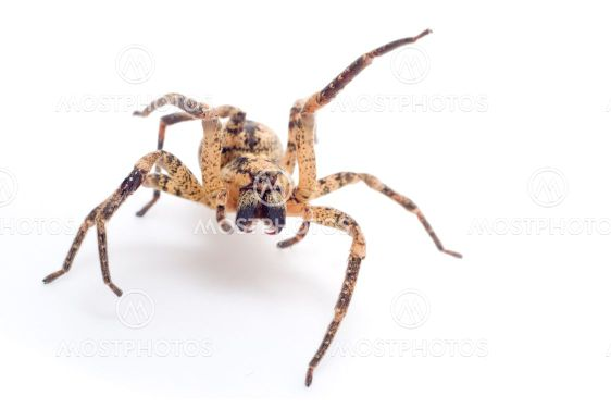 Spider angribe