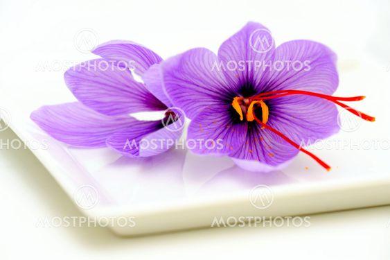 Saffron Flower Closeup