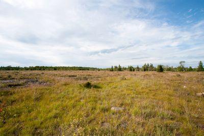 Alvar Grass Land
