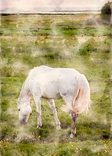 Akvarell av vit häst på strandbete - Silvertid