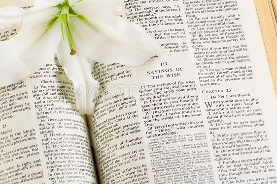 holy bible and white flower
