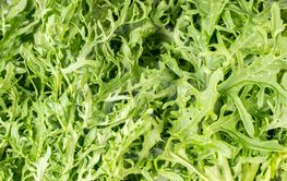 Wasabina, green mustard Leaves. Close up of green crispy...