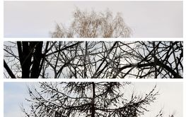 Collage of three photos of trees