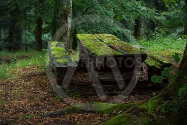 wooden picnic table covered by the moss in...
