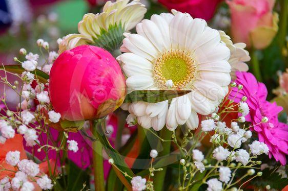 Blommknoppar i bukett.