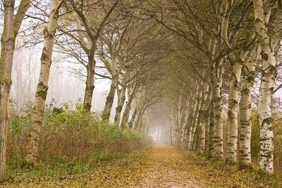 November, lane with trees
