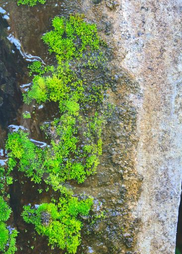 Old wall with moss and various stains