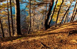 Walk through a forest near a lake on a sunny spring day...