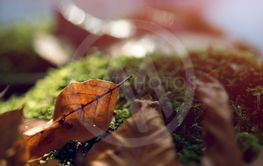 stump with moss and brown leaves in the forest