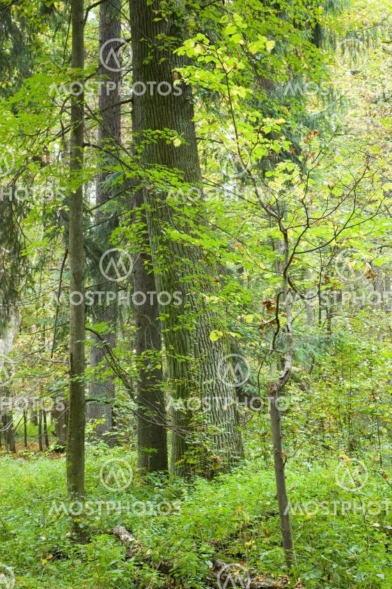 Late summer natural mostly deciduous forest