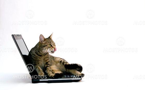 Kat og bærbare