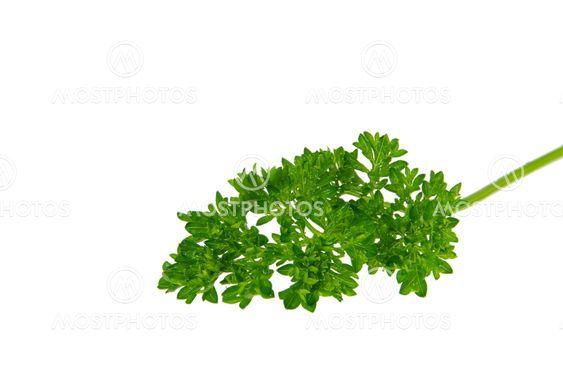Petersilie - parsley 10