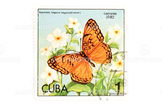 postage stamp butterfly on white