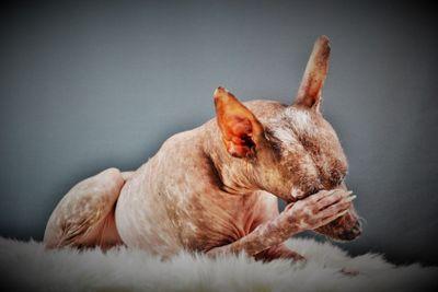 Blyg hund