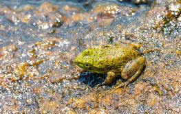 A frog sits near a river