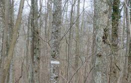 Mossbevuxen stenmur i en lövskog