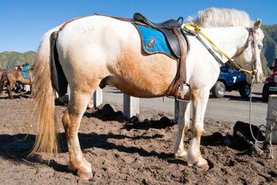 White and Orange Horse