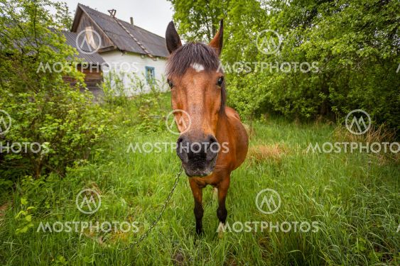 horse on a leash in the village, view from close
