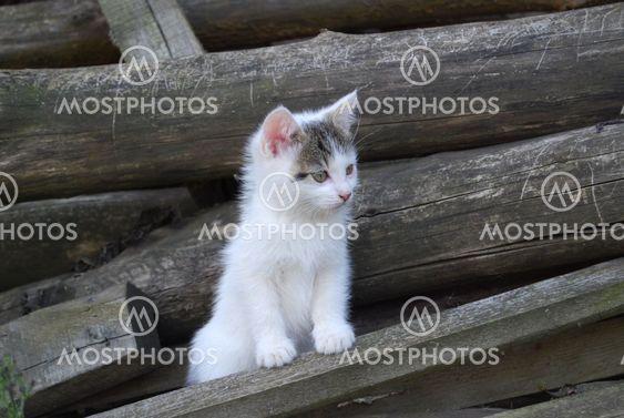 Pieni kissa