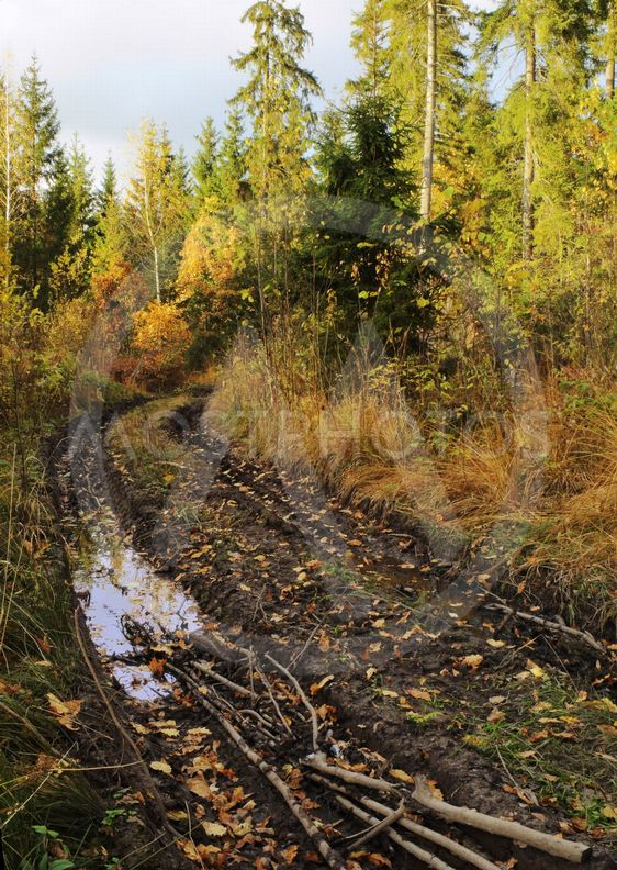 autumn - dirty road