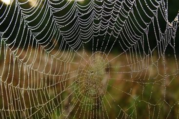 web and water