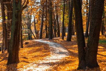 Autumn park with orange and red trees , natural seasonal...