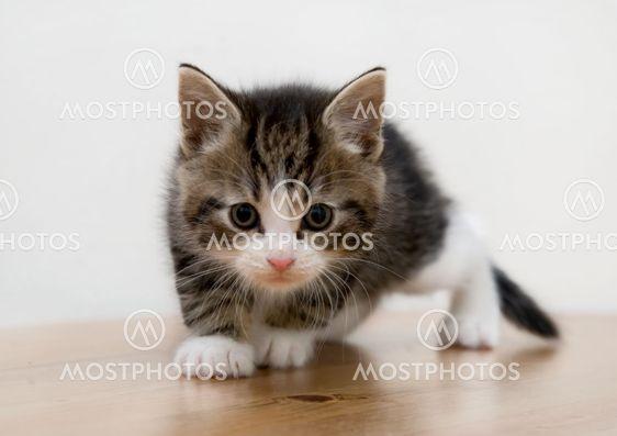 Cat Kid 2