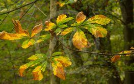 Yellowing leaf,   Autumn