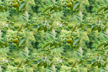 A seamless texture, an endless pattern from the photo -...