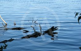 Branches of a Submerged Fallen Tree In the Nearby Lake