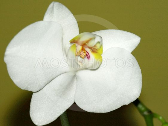Close-up of white orchids on