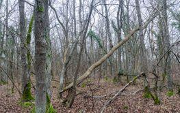 Orörd gammal lövskog i ett naturreservat