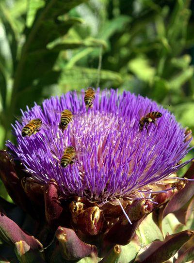 Honey Bee Buffet