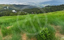Landscape with green hills of Vitosha Mountain