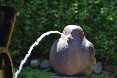 Fountain stone bird