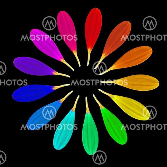 Kolmetoista terälehden Maaginen kukka
