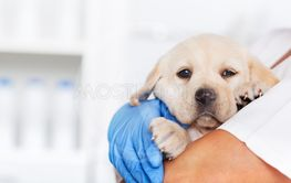 Veterinary healthcare professional holding a cute...