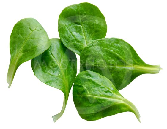 Isolated Spinach Salad Leaves