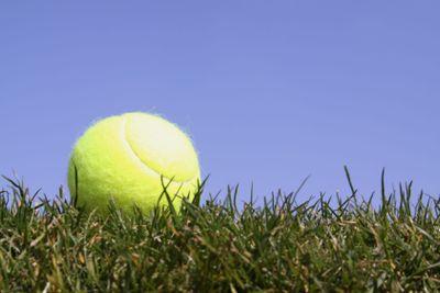 Tennis ball in gras
